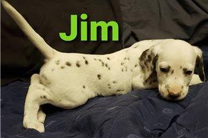 Picture of Jim AKC LUA
