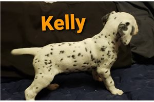 Picture of Kelly AKC LUA