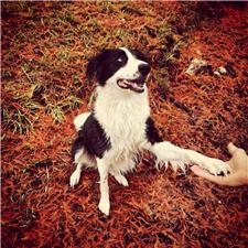 View full profile for Chappell Border Collies