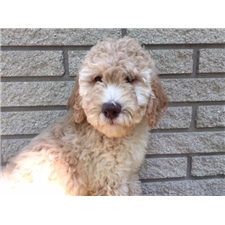 View full profile for Hudson Pups