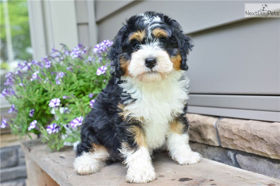 Mixed/Other puppy for sale near Cleveland, Ohio | 9c1f77f8-1e61