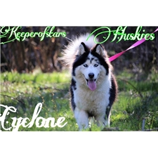 View full profile for Keeperofstars Huskies