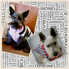View full profile for Blessed Scotties Louisiana