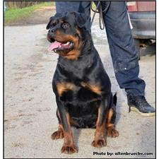 View full profile for Vongriffinshaus Rottweilers
