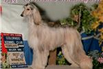 Picture of Show prospect Black & Silver female