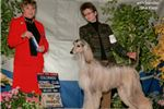 Picture of Beautiful show potential Afghan Hound boy