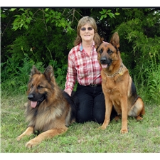 View full profile for Blue Mountain Papillons And German Shepherds