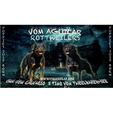 View full profile for Vom Aguilar Rottweilers