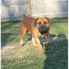 View full profile for Magni Boerboels