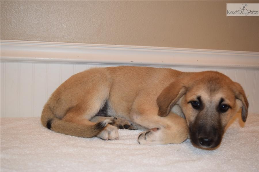 Female 1 German Shepherd Puppy For Sale Near East Idaho Idaho