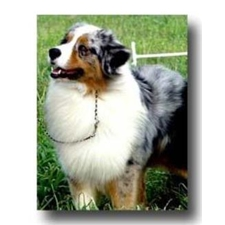 View full profile for Sunny G Ranch Aussies