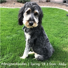 View full profile for Hudson's Doodles