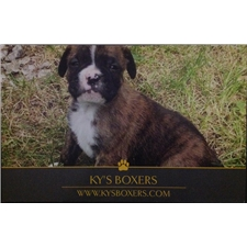 View full profile for Ky's Boxers