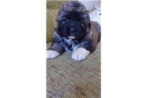 Picture of Tamara