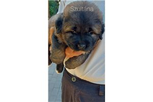 Picture of Sultana