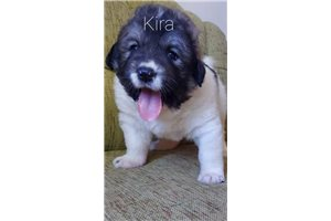 Picture of Kira