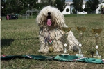 Picture of Miss Mops