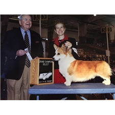 View full profile for Cook Arena Corgis