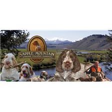 View full profile for Saddle Mountain Spinone