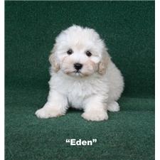 View full profile for Precious Puppy