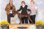Picture of UP COMING Dual CHamp Litter(Dixie)