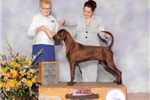 Picture of WESTMINSTER TOP AKC CHAMPIONS