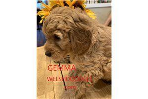 Picture of Gemma