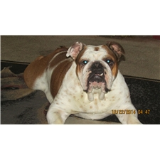 View full profile for Scotts Bulldogs