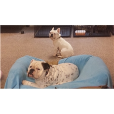 View full profile for Wrinkles And Wags