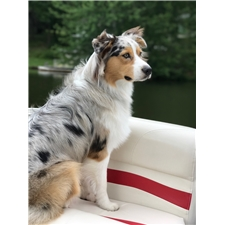 View full profile for Kirkseys Aussies