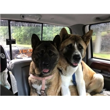 View full profile for Smith's Akitas