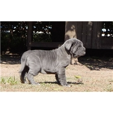 View full profile for Titus Kennels