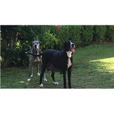 View full profile for Palmetto Danes