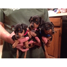 View full profile for Briese Way Minpins