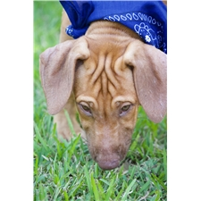 View full profile for Cenla Ridgebacks
