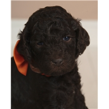 View full profile for Poodle And Doodle