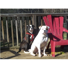 View full profile for Rock N Roll American Bulldogs