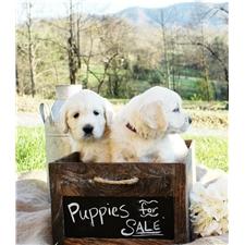 View full profile for Ponderosa Pups