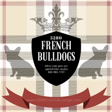 View full profile for 5280 French Bulldogs.Com