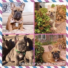 View full profile for Blissful Bulldogs