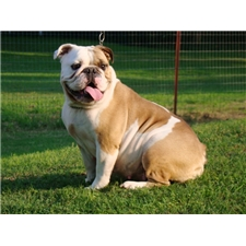 View full profile for Blue Ribbon Bulldogs