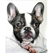 View full profile for Fashionbulldog10