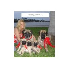 View full profile for Majestic Mastiffs Of Florida