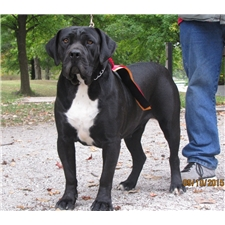 View full profile for Mid-America Boerboels