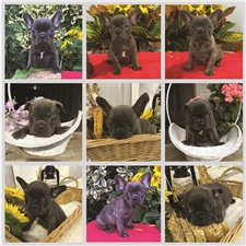 View full profile for The Dutch Kennel