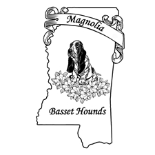 View full profile for Magnolia Basset Hounds