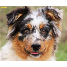 View full profile for Horseshoe Aussies
