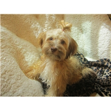 View full profile for Fl Havanese