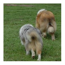 View full profile for Sher's Grade A Collies