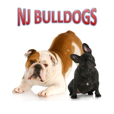 View full profile for Nj Bulldogs